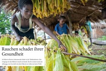 Jugendliche bei der Tabakernte in Malawi