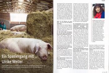 SKR_Schwein_Teaser_VÖ